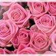 Background of perfect pink roses — Stock Photo