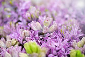 Ethereal background of lilac-coloured flowers — Stock Photo