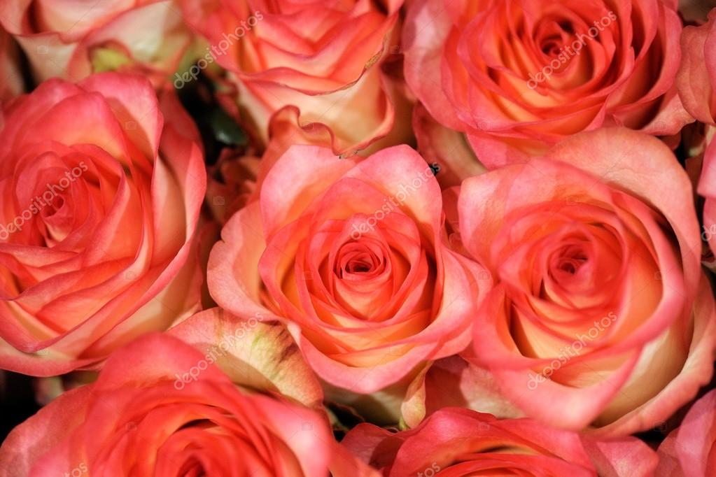 Hermosas corales rosas — Foto de stock © PHOTOLOGY1971