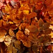 Background of bronzed autumn leaves — Stock Photo