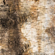 Stock Photo: Background of birch bark with knot