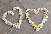Two heart shapes made of daisies, on pavement — Stock Photo