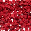Background texture of rich red rose petals — Stock Photo