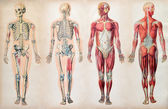 Old vintage anatomy charts of the human body — Stock Photo