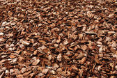Cortex or wood chip texture — Stock Photo