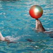 Dolphins playing ball — Stock Photo
