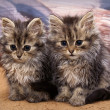 Stock Photo: Two kittens sitting