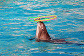Beautiful dolphin — Stock Photo