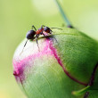 Ant. — Stock Photo