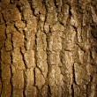 Tree trunk — Stock Photo #24519459