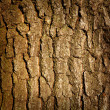Stock Photo: Tree trunk
