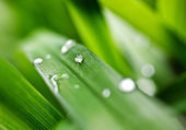Dew drops on the grass — Stock Photo