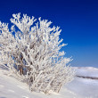 Snowy tree on a sunny day — Stock Photo