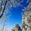 Cold weather  — Stockfoto