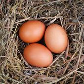 Nest eggs — Stock Photo