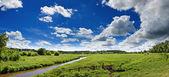 Summer panoramic landscape — Stock Photo