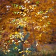 Young birch tree — Stock Photo #50947343
