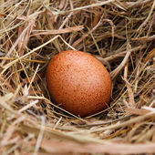 Egg in the nest — Stock Photo