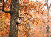 Birdhouse on tree — Stock Photo