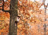 Birdhouse on tree — Stock Photo