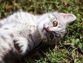 Funny kitten — Stockfoto