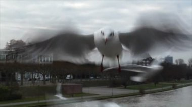 Feed seagulls by hand slowmo — Video Stock
