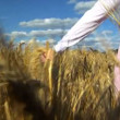Womans hand brushing over wheat field wide — Stock Video