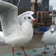 Seagulls close frankfurt skyline slowmo — Stock Video #14740925