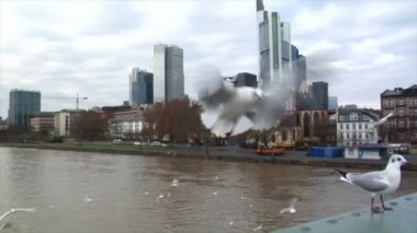 Many seagulls frankfurt skyline slowmo — Stock Video