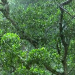 Green rain forrest 10103 - Stock Photo