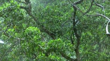 Green rain forrest 10103 — Stockvideo