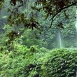Stock Video: Rain waterfall jungle 10164