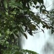 Waterfall behind tree 1 10191 — Stock Video