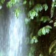 Waterfall under tree 10204 — Stockvideo