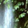 Waterfall under tree 10204 — Vídeo de stock