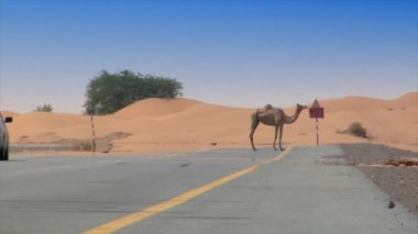 Car camel speed pass heat haze 10291 — Stock Video