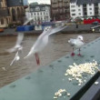 Feed seagulls frankfurt skyline slowmo 10603 - Stock Photo