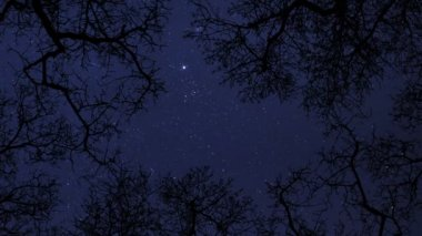 Night sky stars between trees time lapse 10856 — Stock Video