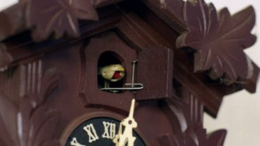 Cuckoo clock cuckoos 12 times w weights intercut 11350 — Stock Video