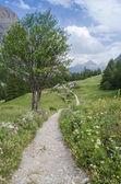 Sentier de montagne — Photo