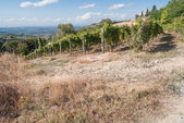 Vineyard in the Countryside — Stock Photo