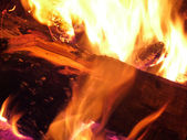 Fire and the wood — Stock Photo