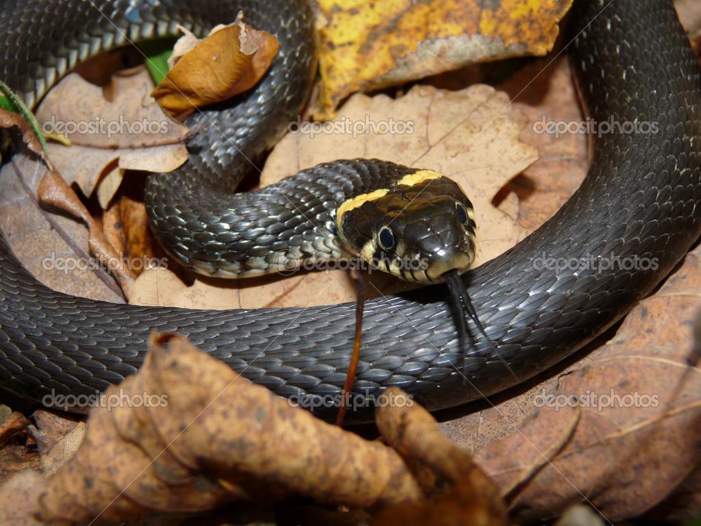 Effrayant serpent wallpapers peinture - Peinture effet serpent ...