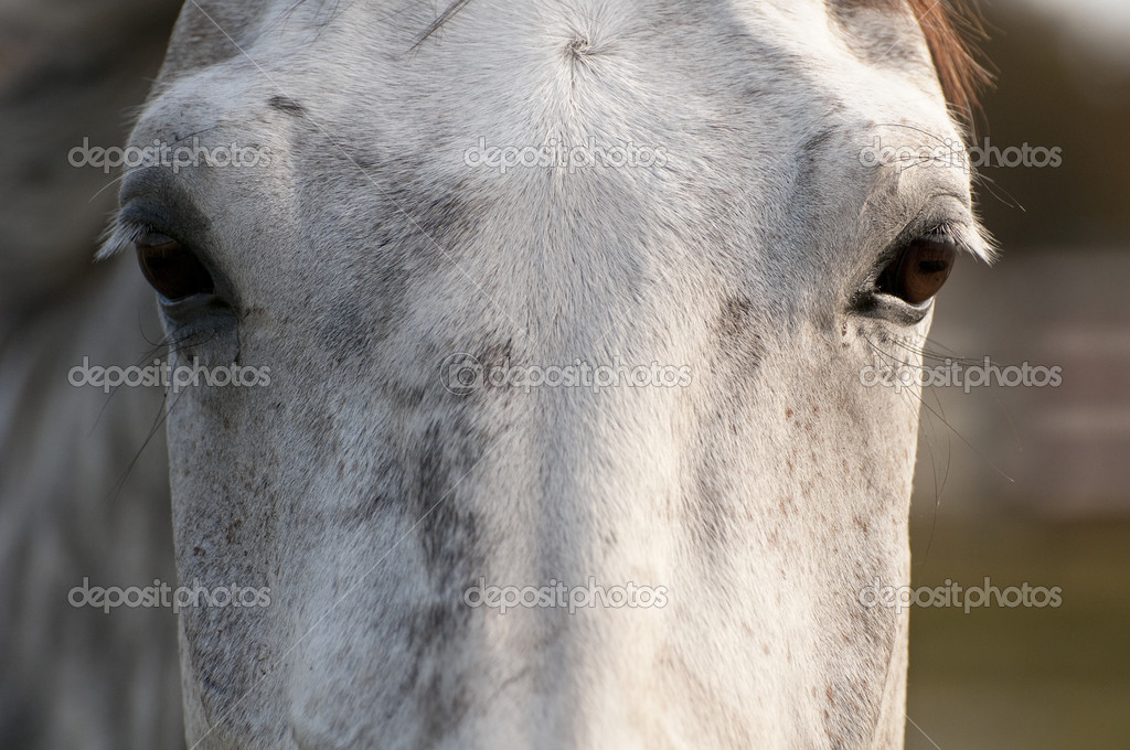 Horse shot pointblank in the head in Youtube video that