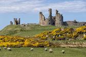 Dunstanburgh castle — Stock Photo