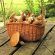 Stock Photo: Basket full of eatable mushrooms boletus on table in forest