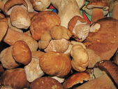 Stack of eatable mushrooms boletus — Stock Photo