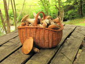 Basket full of eatable mushrooms boletus on the table in a forest — Stock Photo
