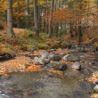 Cold and clean stream runs through beech forest in autumn colours — Stock Photo