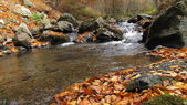 Clear mountain creek ve turuncu ve sarı yapraklar — Stok fotoğraf